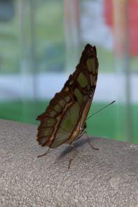 Garten der Schmetterlinge @ Sayn